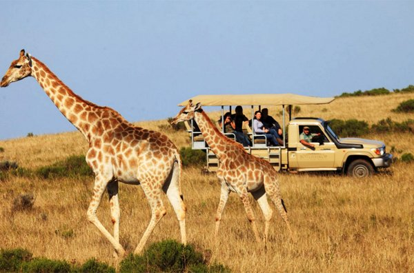 GARDEN ROUTE – Botlierskop Private Game Reserve