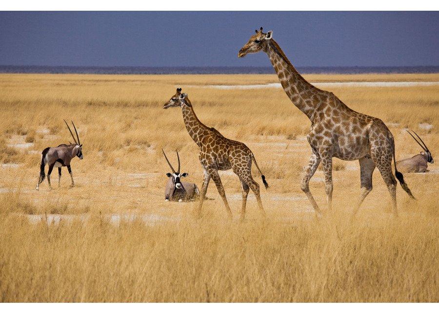 NAMIBIA Mokuti Etosha Lodge  35% Airline Staff Discount