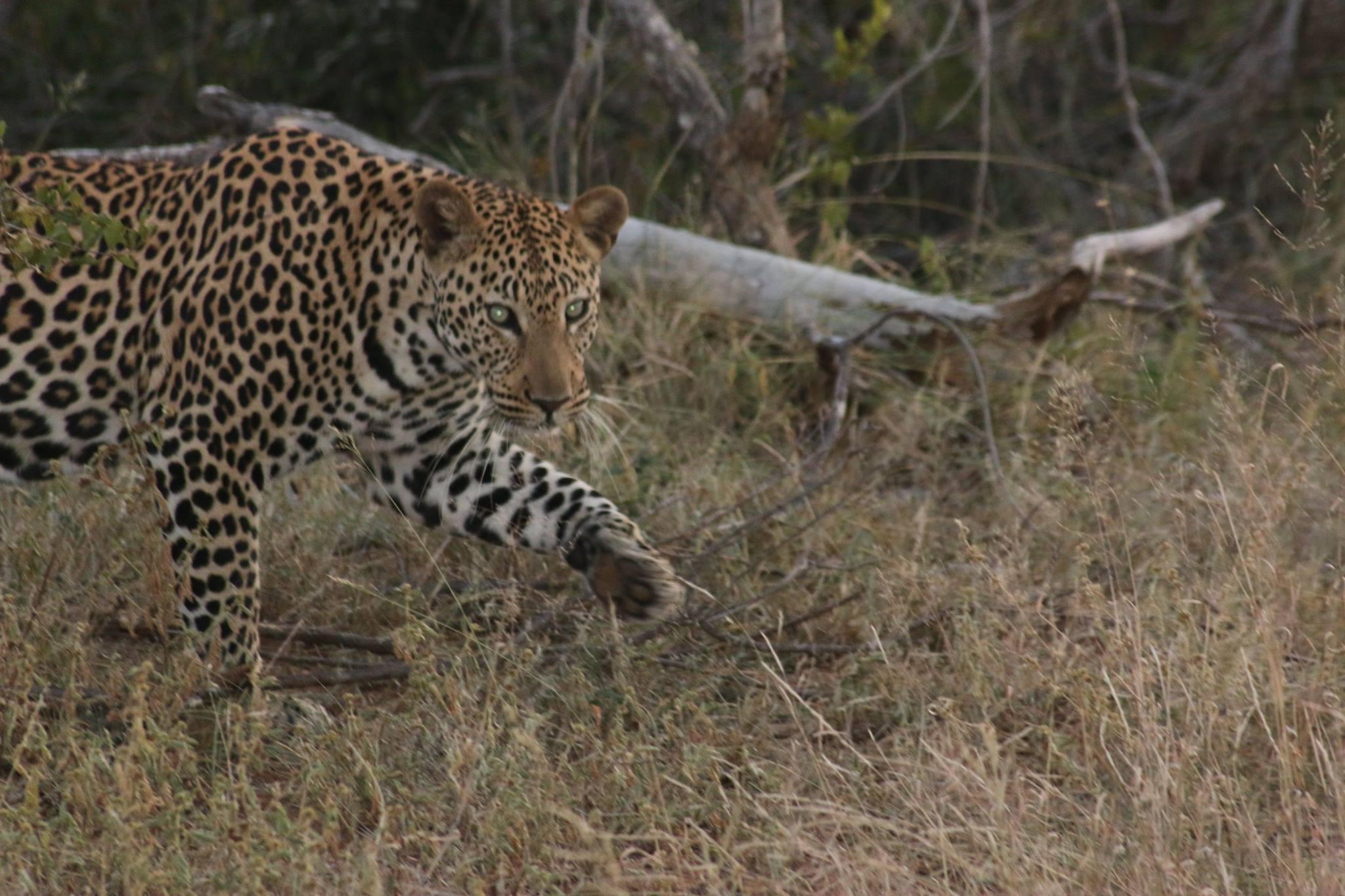 KRUGER PARK – Naledi Lodges