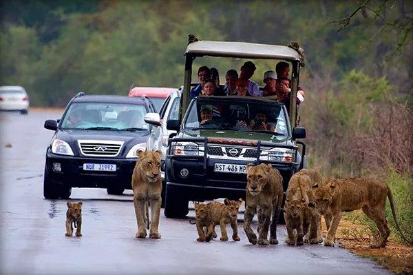 KRUGER PARK  – Phumula Kruger Lodge and Safaris