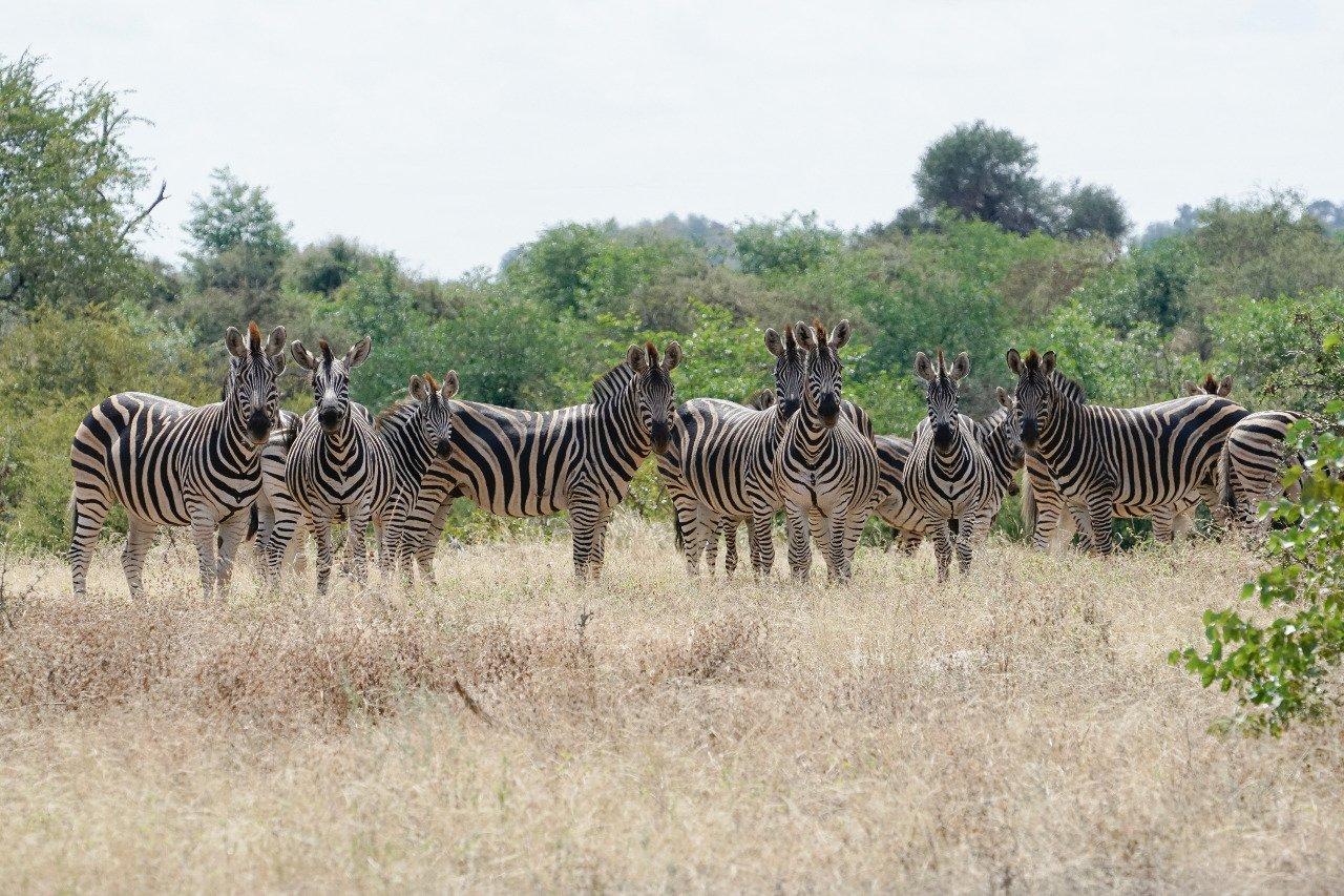 BOTSWANA – The Africa Experience