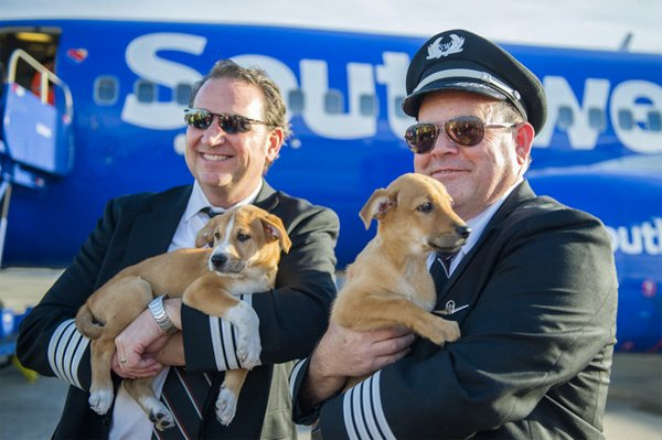 Southwest teams up with Lucky Dog Animal Rescue to help with