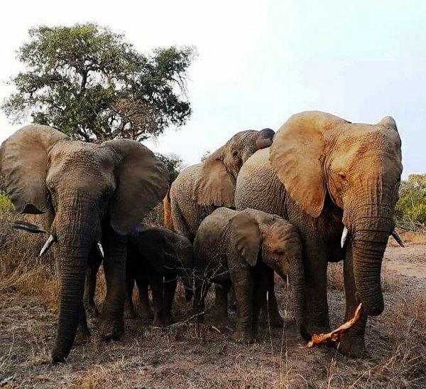 Kwa Madwala Private Game Reserve