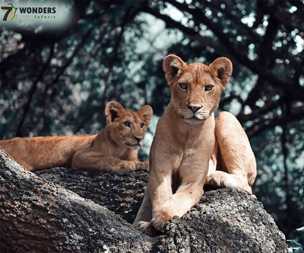 ARUSHA – Seven Wonders Safari