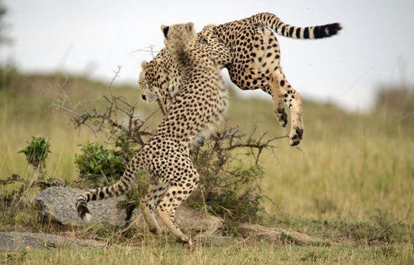 MASAI MARA Olmoran Tented Camp –  54% Airline Staff Discount