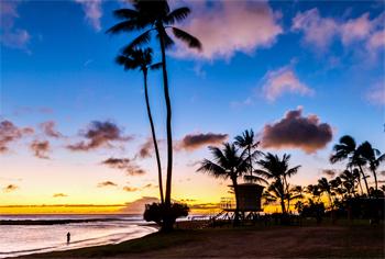 Hawaii Palmer